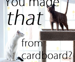 You Made That From Cardboard?