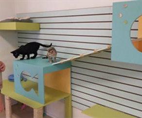 Cat Activity Wall