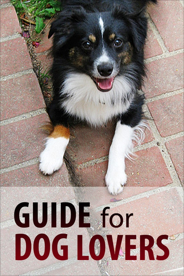 Guide for Dog Lovers