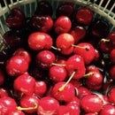 Cherry moonshine with sugar and yeast