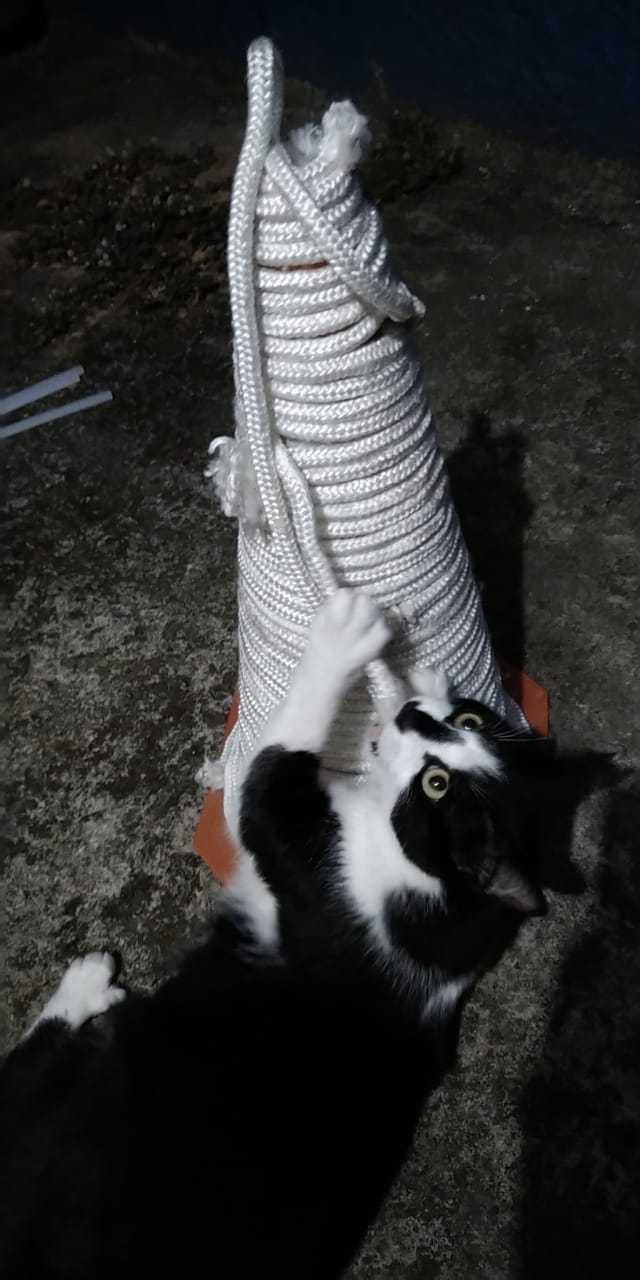 Deixe Os Gatos Brincarem - Let the Cats Play
