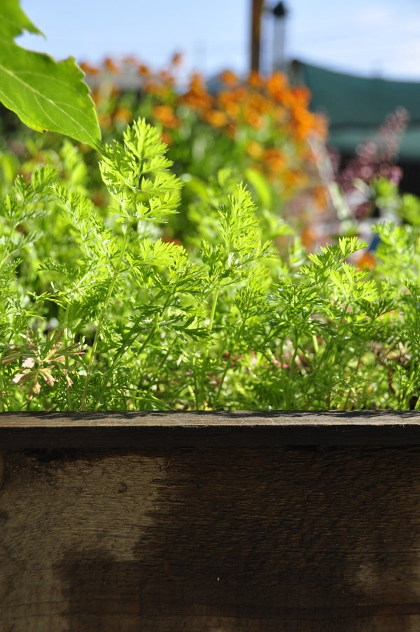 How to Make the Most of Your Garden Space and Grow More Vegetables