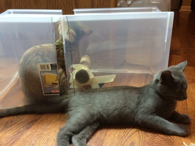 Splash/cat Guard