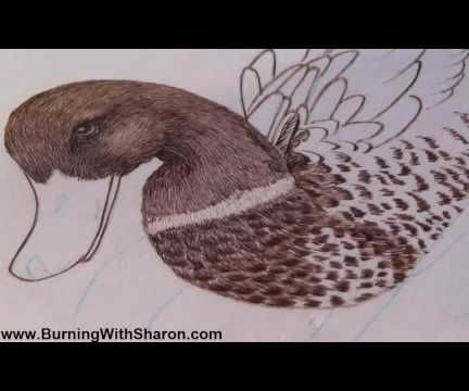 Pyrography: How To Woodburn The Chest Feathers On A Mallard Duck