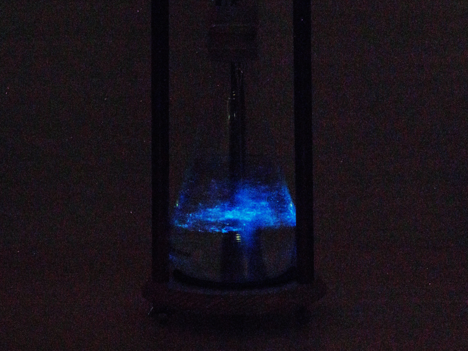 The Light Fountain: a Bioluminescent Hourglass