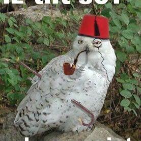 owl5ua.jpg