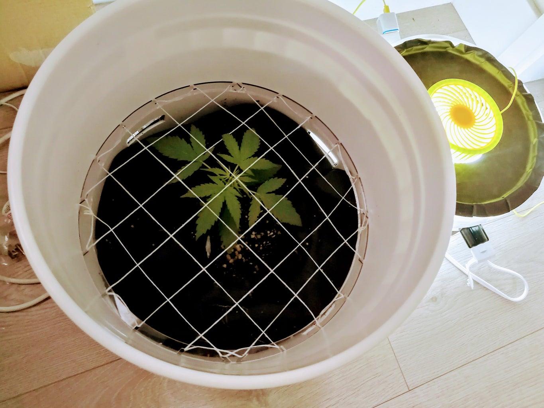 Low Stress Training SCROG Laser Cut Acrylic Grid for Grow Buckets
