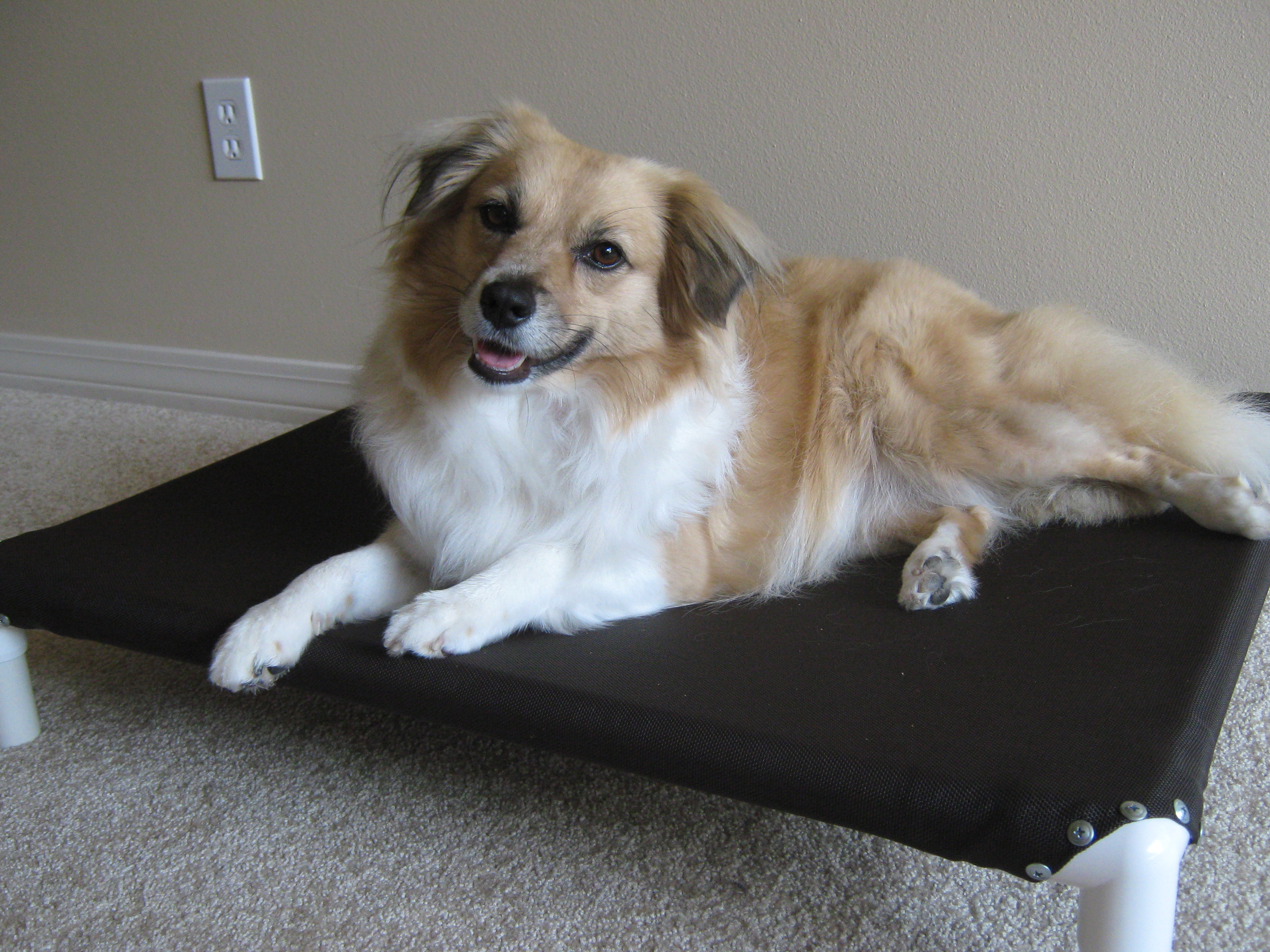 Build A Dog Cot For Around 10 15 Steps Instructables