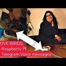 VALENTINE'S DAY Love Birds : a Box to Send and Receive Telegram Audio Message