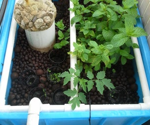 DIY Aquaponics System for Small Space