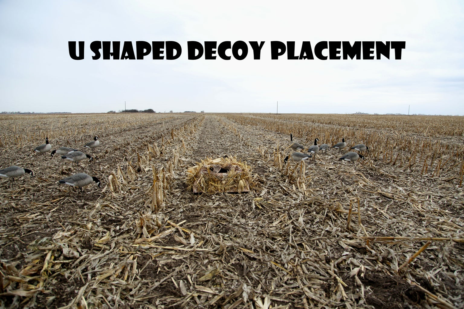 U Shaped Placement of Blind and Decoys