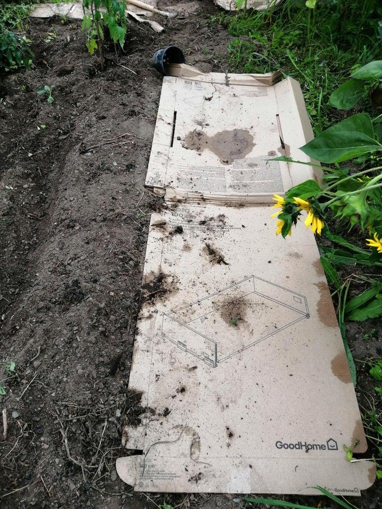 Growing Turnips Using Cardboard