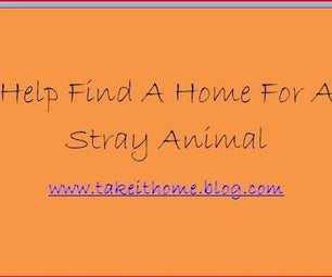 Help Find a Home for a Stray Animal