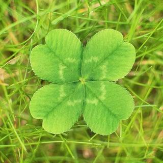 4-leaf Clovers: a Finder's Guide