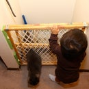 Litter box protection with baby gate and cat door