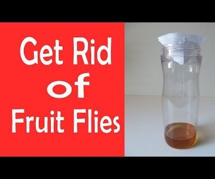 How to Get Rid of Fruit Flies in Your Home