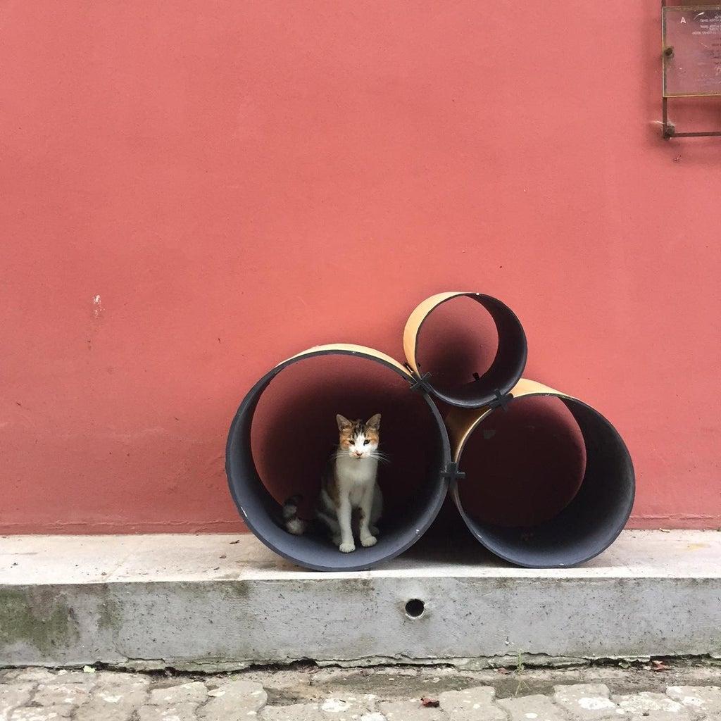 Zero Waste Furniture / Bookshelf to Cat House