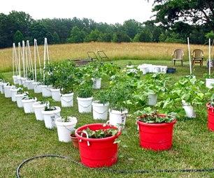 Growing Plants in Buckets