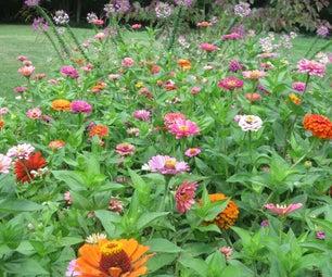 Harvesting Flower Seeds for Next Year's Gardens