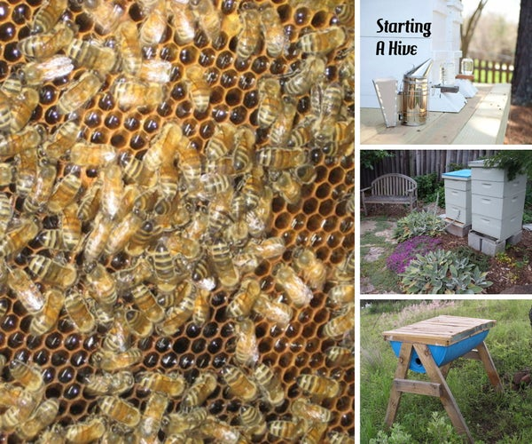 Bzzz: 42 Projects All About Beekeeping