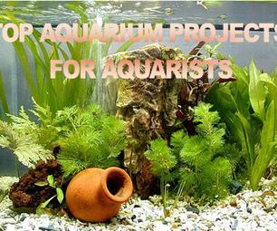 Top Aquarium Projects for Aquarists