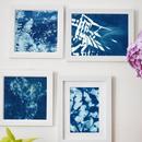 Cyanotype- Indigo Sun Printing