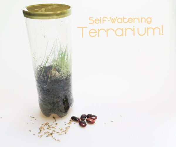Self-Watering Terrarium!