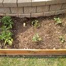 My 2011 Garden