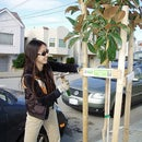 How to get a tree on your block in San Francisco