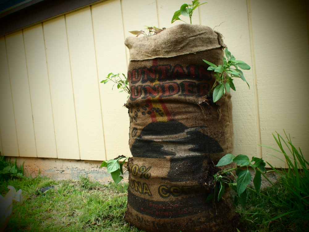 A garden in a sack