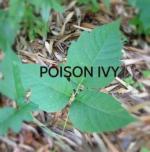 Plant Precautions!