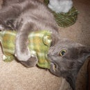 Catnip Cat Toys