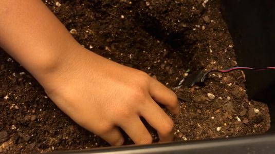 Placing the Soil Moisture Sensor