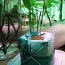 Plastic grow-bomb: Hydroponics from plastic bags
