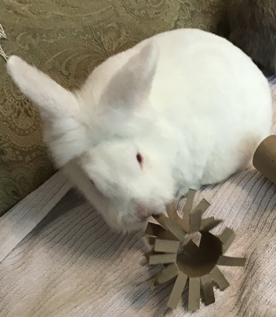 Bunny Treats and Toys.