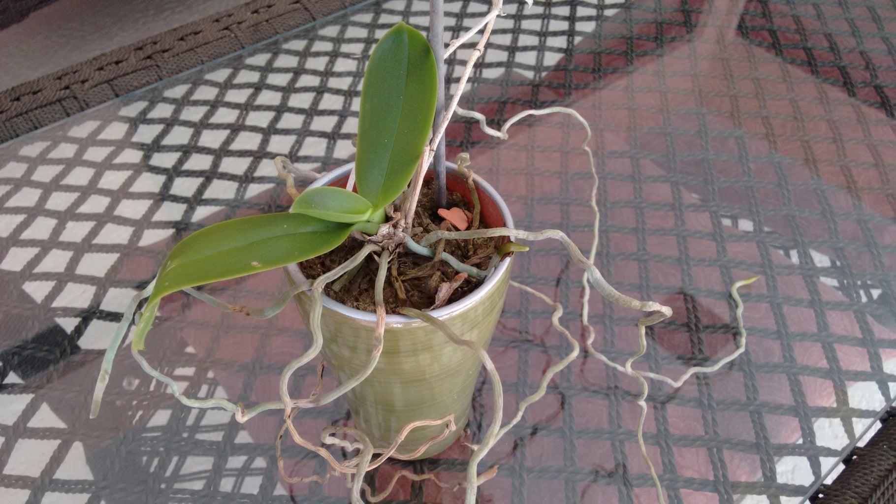 Buy Cheap/Split Plants