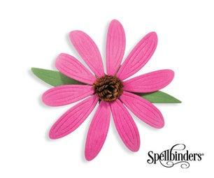 Blooming Echinacea
