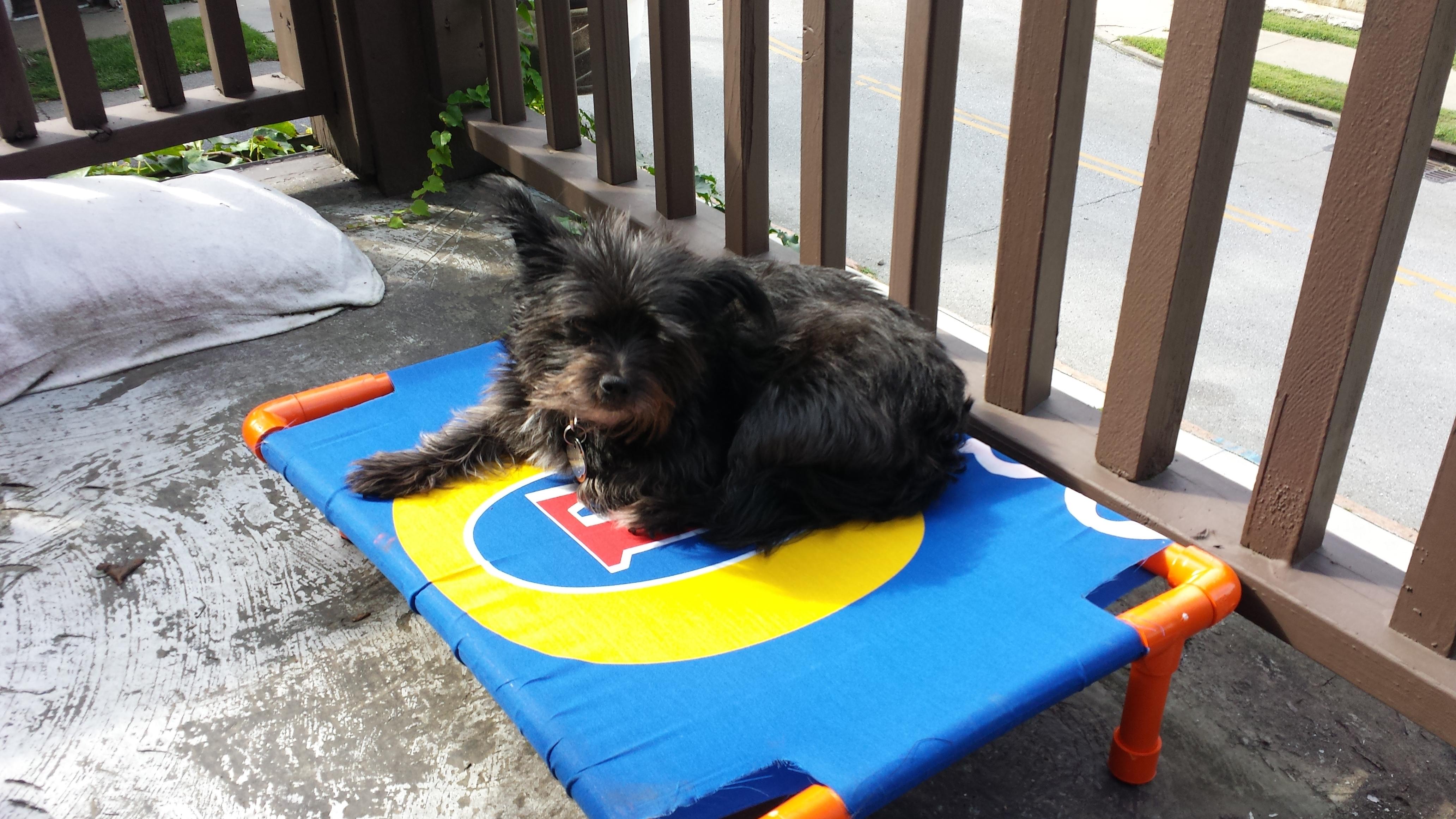 Sweet Dog Hammock