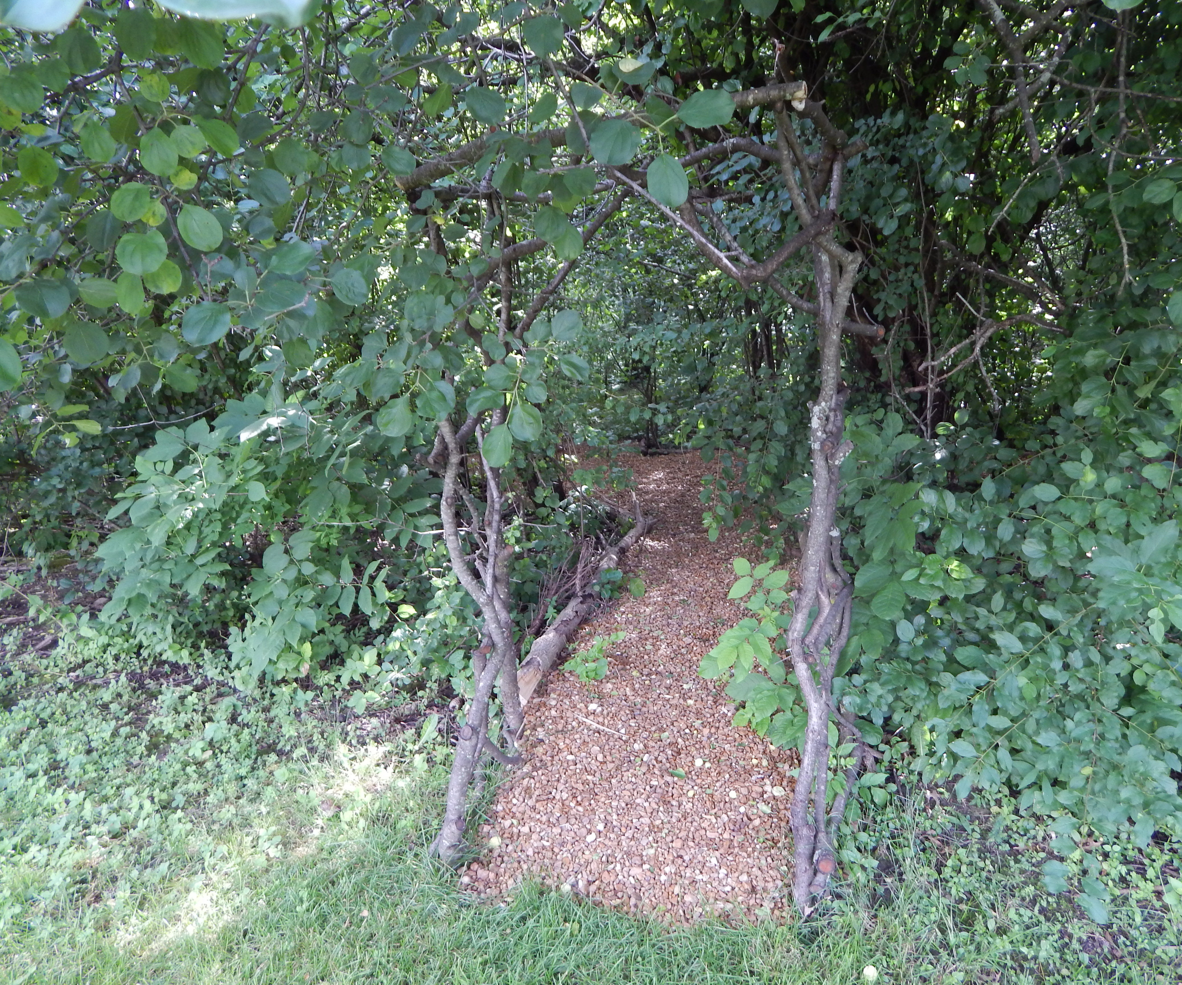Create a Backyard Woodland Paradise with Recycled and Reused Materials