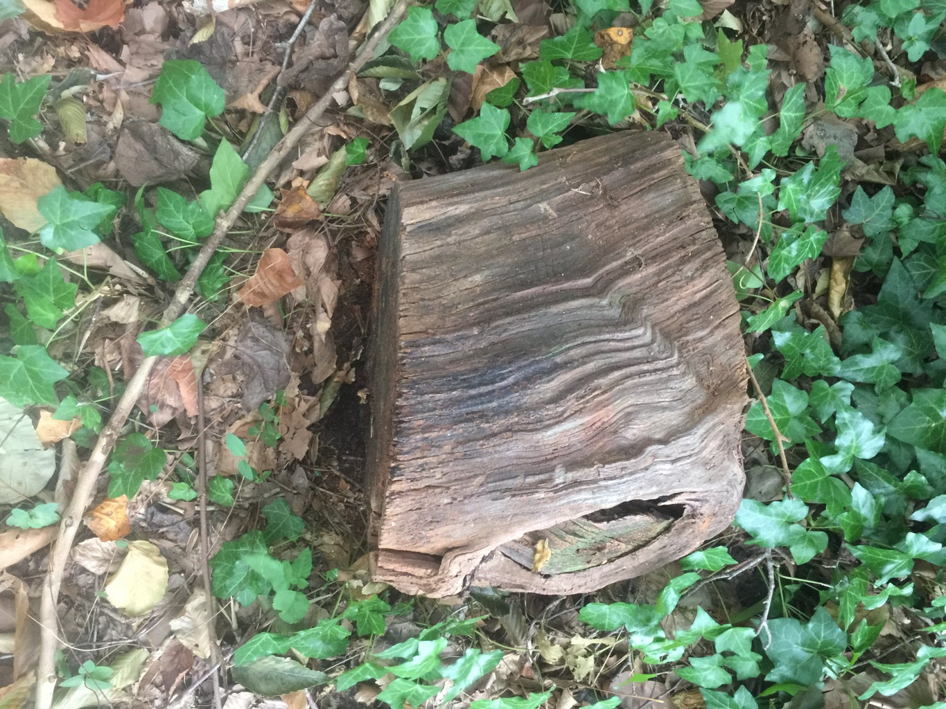 What You Need and Finding Your Stump