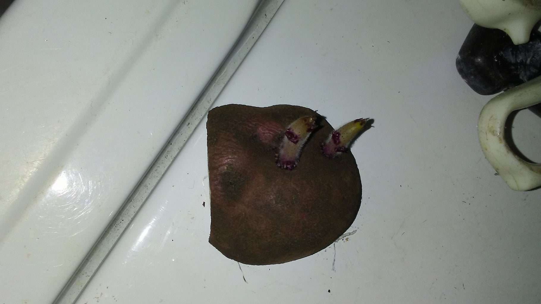 The Potato Cutting