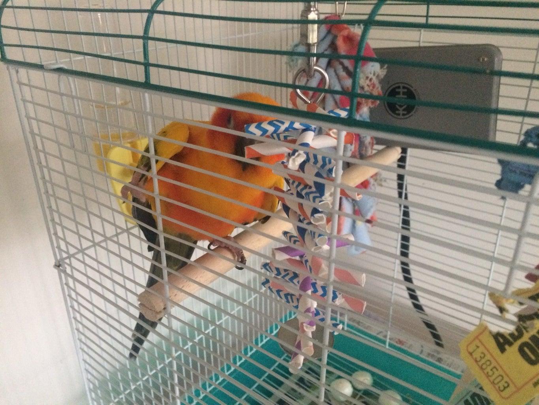 Assemble the Bird Toy