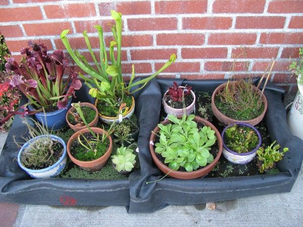 Carnivorous Plant Tray