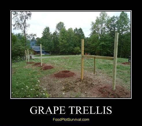 Wildlife Grape Trellis
