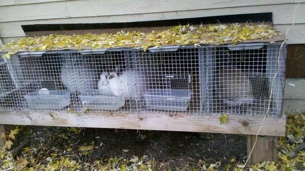 Indoor/Outdoor Rabbit Hutch