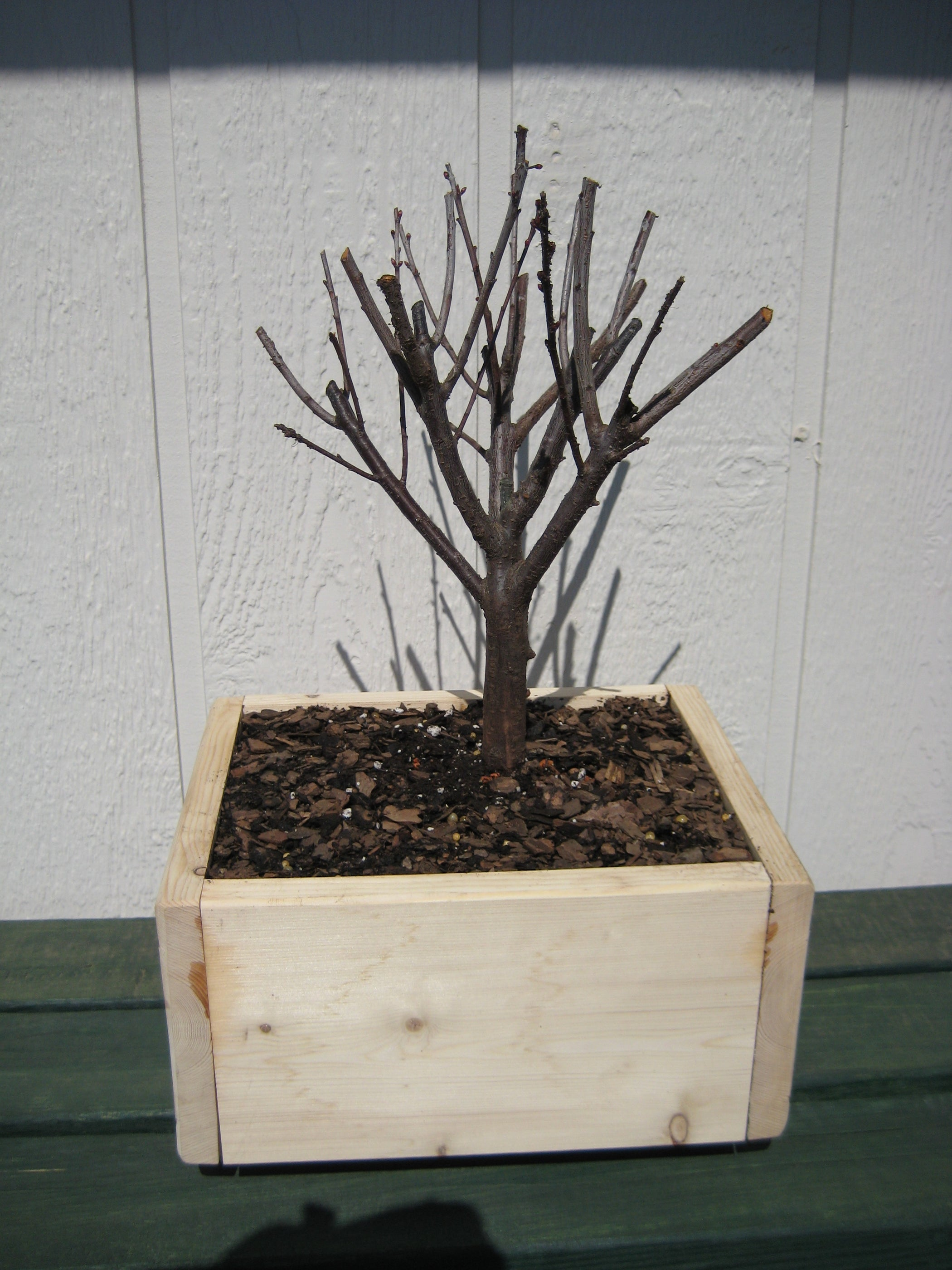 Starting A Bonsai 9 Steps With Pictures Instructables