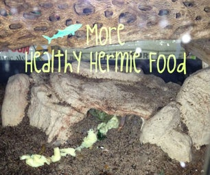 How to Spoil Your Hermit Crabs: Food Edition II