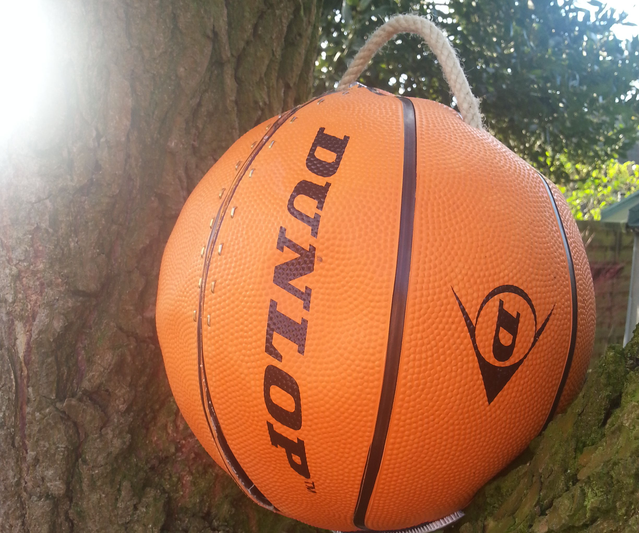 Portable swing in a ball