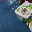Hamster Homes and Toys