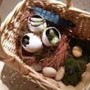 Bird's Nest Plant Pot